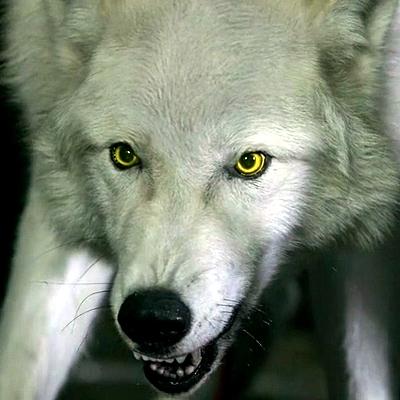 10-hemlock-grove-werewolf-optimisation-google-image-wordpress