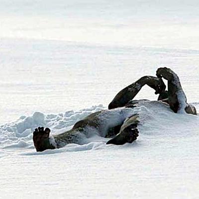 9-the-last-winter-ron-perlman-2006-optimisation-google-image-wordpress