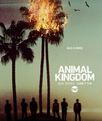 1-animal-kingdom-series-petitsfilmsentreamis.net-optimisation-image-google-wordpress