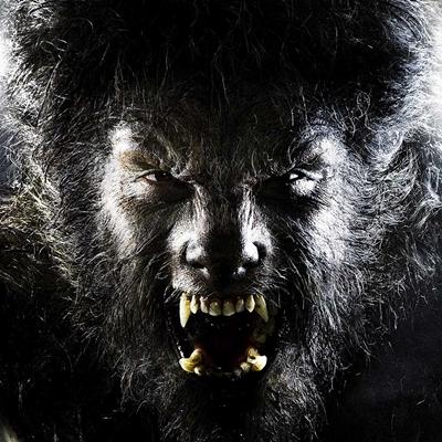 21-The-Wolfman-benicio-del-toro-optimisation-google-image-wordpress