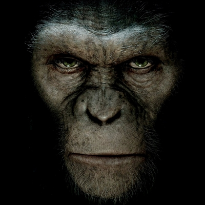 14-La-Planète-des-Singes-Les-Origines-rise-of-the-planet-of-the-apes-optimisation-google-image-wordpress
