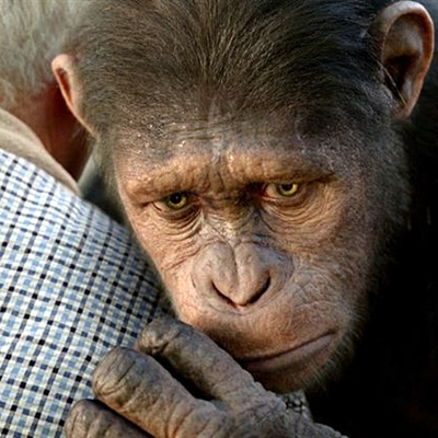 9-La-Planète-des-Singes-Les-Origines-rise-of-the-planet-of-the-apes-optimisation-google-image-wordpress