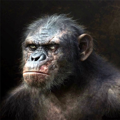 13-la-planete-des-singes-l-affrontement-2014-optimisation-google-image-wordpress