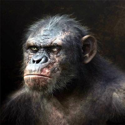 13-la-planete-des-singes-l-affrontement-2014-optimisation-google-image-wordpress
