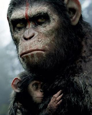 15-la-planete-des-singes-l-affrontement-2014-optimisation-google-image-wordpress