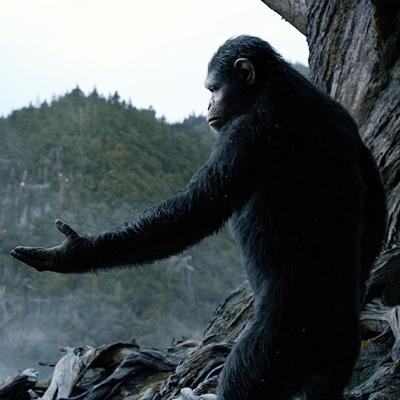 16-la-planete-des-singes-l-affrontement-2014-optimisation-google-image-wordpress