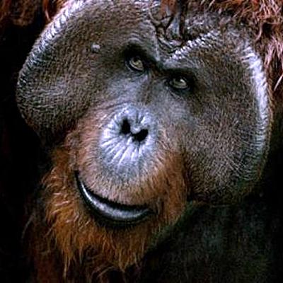 19-la-planete-des-singes-l-affrontement-2014-optimisation-google-image-wordpress