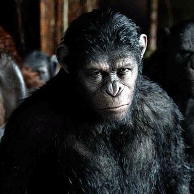 2-la-planete-des-singes-l-affrontement-2014-optimisation-google-image-wordpress