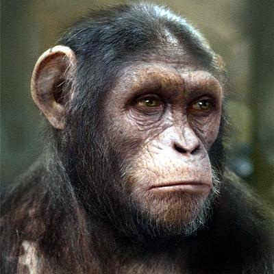 5-la-planete-des-singes-l-affrontement-2014-optimisation-google-image-wordpress