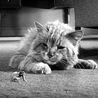 19-l-homme-qui-retrecit-the-shrinking-man-1957-petitsfilmsentreamis.net-abbyxav-optimisation-image-google-wordpress
