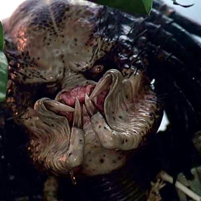 15-predator-schwarzenegger-1987-petitsfilmsentreamis.net-abbyxav-optimisation-image-google-wordpress