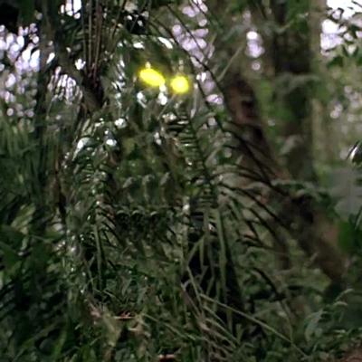 9-predator-schwarzenegger-1987-petitsfilmsentreamis.net-abbyxav-optimisation-image-google-wordpress